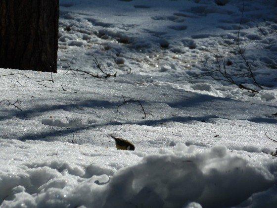 Vogel im Schnee