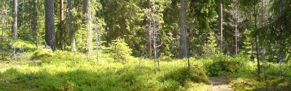 Trail in Süd-Schweden