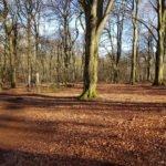 Birgeler Urwald im Frühjahr